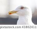 นกนางนวล 43802411