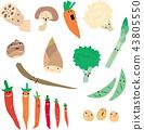 야채, 채소, 흰색 배경 43805550