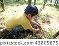 การขุดหน่อไม้ 43805875