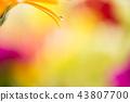 bloom,blossom,blossoms 43807700