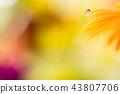 bloom blossom blossoms 43807706