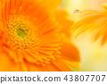 bloom blossom blossoms 43807707
