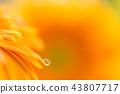 bloom blossom blossoms 43807717