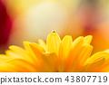 bloom blossom blossoms 43807719