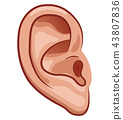 Vector ear on white background 43807836