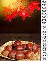 เกาลัด,ฤดูใบไม้ร่วง,ต้นเมเปิล 43808046