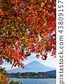 ท้องฟ้าในฤดูใบไม้ร่วงและใบไม้เปลี่ยนสีและภูเขาไฟฟูจิ 43809157