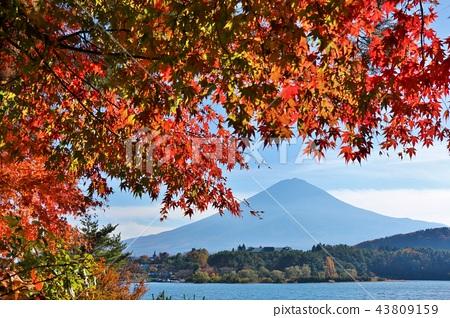 ท้องฟ้าในฤดูใบไม้ร่วงและใบไม้เปลี่ยนสีและภูเขาไฟฟูจิ 43809159