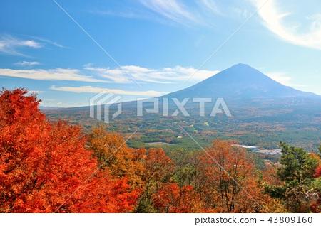 ภูเขาฟูจิ,ภูเขาไฟฟูจิ,ฤดูใบไม้ร่วง 43809160