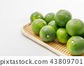 柑橘類水果產地:大分縣莊內 43809701