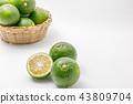 柑橘類水果產地:大分縣莊內 43809704