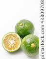 柑橘類水果產地:大分縣莊內 43809708