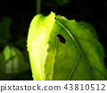 虫子 漏洞 昆虫 43810512