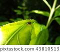 虫子 漏洞 昆虫 43810513