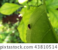 虫子 漏洞 昆虫 43810514