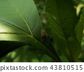 虫子 漏洞 昆虫 43810515