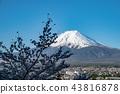 富士山 櫻花 櫻 43816878
