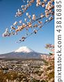 富士山 櫻花 櫻 43816885