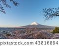 富士山 櫻花 櫻 43816894