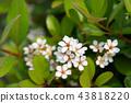 花 花卉 開花 43818220