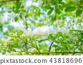 花 樹 花卉 43818696