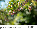 blueberries, blueberry, fruit 43819818