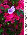 花 花卉 花朵 43819941