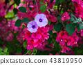 花 花卉 花朵 43819950