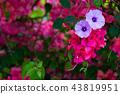 花 花卉 花朵 43819951