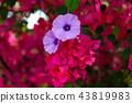 花朵 花卉 花 43819983