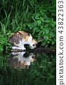cat, water, summer 43822363