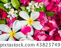 Close up of summer blossom flower in jar. 43823749