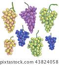Hand Drawn Grape Bunch Variety 43824058