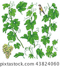 Hand Drawn Grape Branches Sketch 43824060