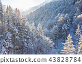 Beautiful winter landscape in the forest. 43828784