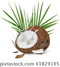 close-up of a coconuts with milk splash on white background 43829165