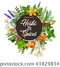 spice, herb, plant 43829834