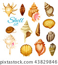 sea, shell, seashell 43829846