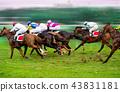 Race horses with jockeys on the home straight 43831181