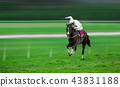 Race horse with jockey on the home straight 43831188