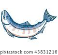 연어, 물고기, 생선 43831216