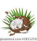 close-up of a coconuts with milk splash on white background 43831259