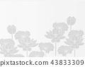 พื้นหลังไปรษณียบัตรของ Lotuses 43833309
