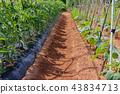 밭 농사 43834713