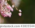 馬醉木 花朵 花 43835544