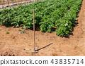밭 농사 이미지 43835714