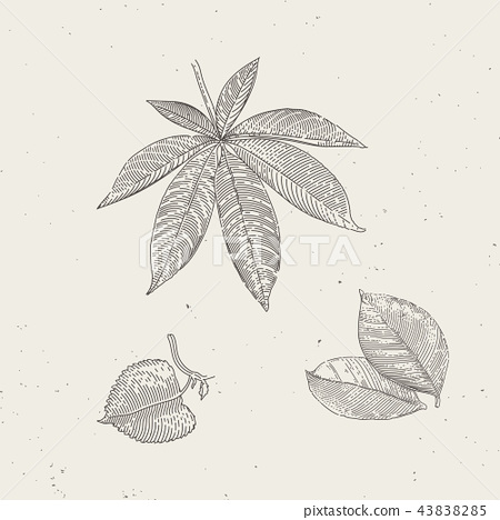 Hand drawn vintage illustrations of leafs 43838285