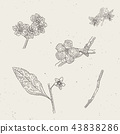 blossoms,engrave,engraved 43838286