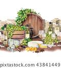 wine vine grape 43841449