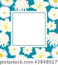 Chrysanthemum, Aster, Camellia, Cosmos Lily Flower 43848027